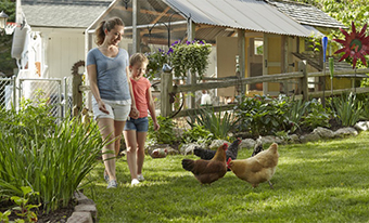 Backyard Poultry Farmers